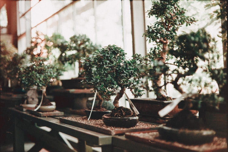 Bonsai, Museum, Japan, Garden, Trees, Culture, Analogic, Canon, AE-1, Film, 35mm, Grain, Lens Flare, Milan, Italy, Sun